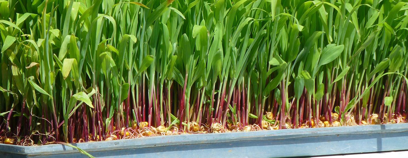 Passive hydroponics
